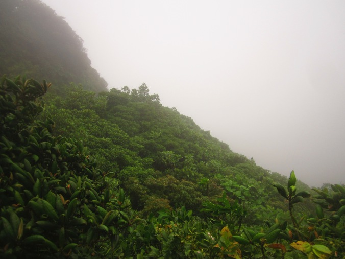 The Clouds of the Cloud Forest