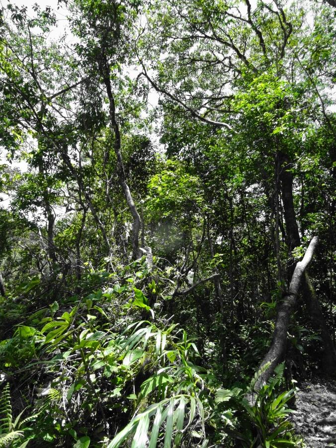 Jungle impressions